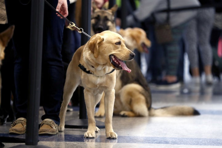 "Delta Airlines announced Friday that it is cracking down on passengers bringing ""emotional support"" animals on flights, saying the lack of regulation on the animals has led to an 84% increase of animal-related incidents on board."