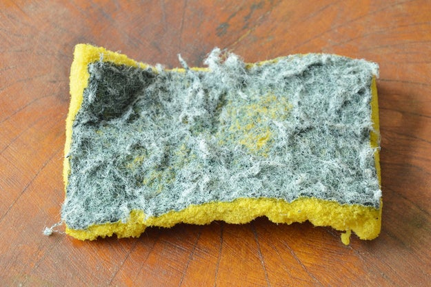 Toss your dirty old kitchen sponge