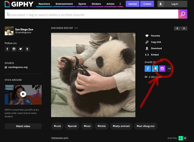 On Giphy.com, click on any GIF and select the Instagram share button, then enter your email address.