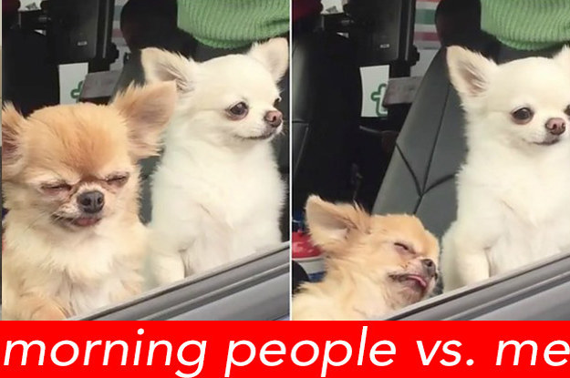 Tell Us About Your Morning Routine And We'll Guess What Kind Of Dog You Are