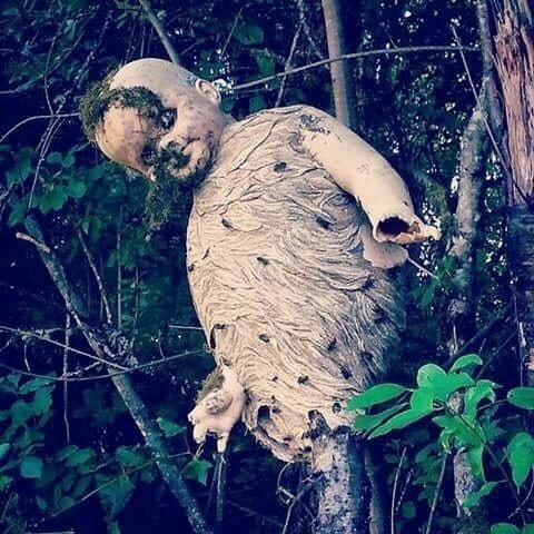 These wasps built a nest around an abandoned baby doll because nightmares are real, people: