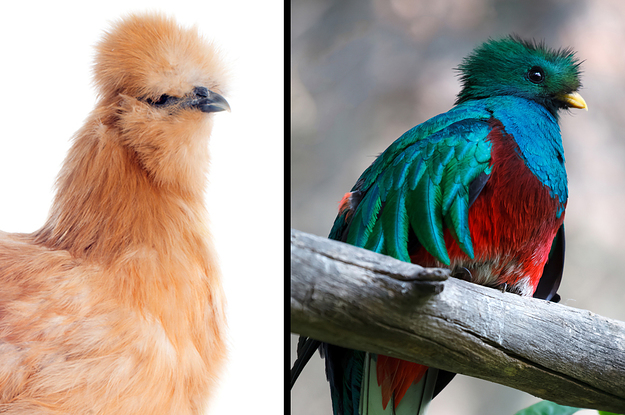 Which Bird Matches Your Aesthetic?