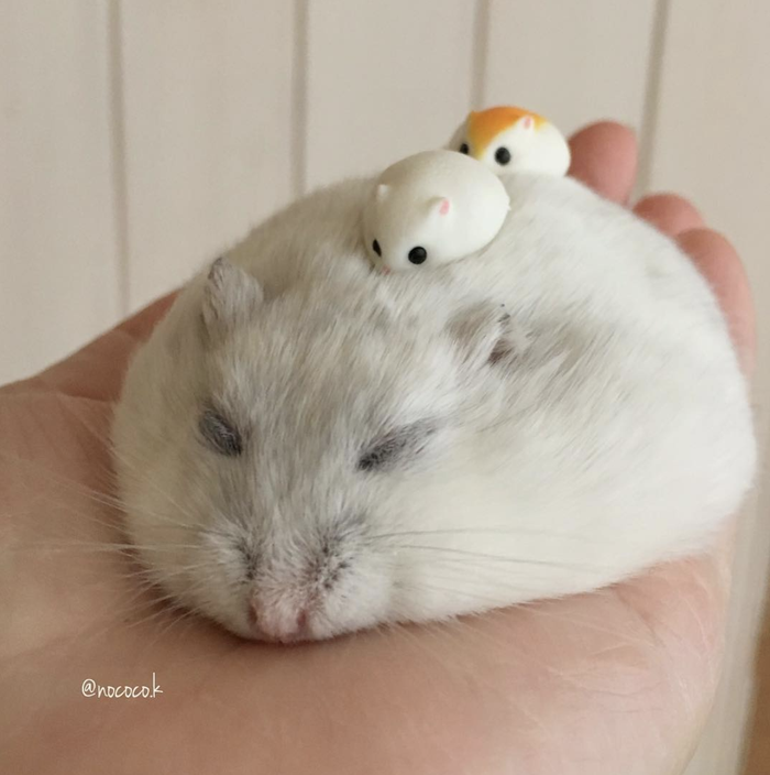 We can't decide if this ball of fur is cuter awake or asleep!