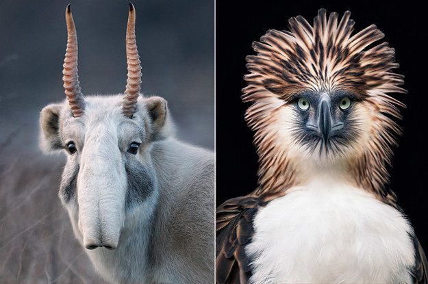 A Photographer Spent Two Years Photographing Animals That May Soon Be Extinct