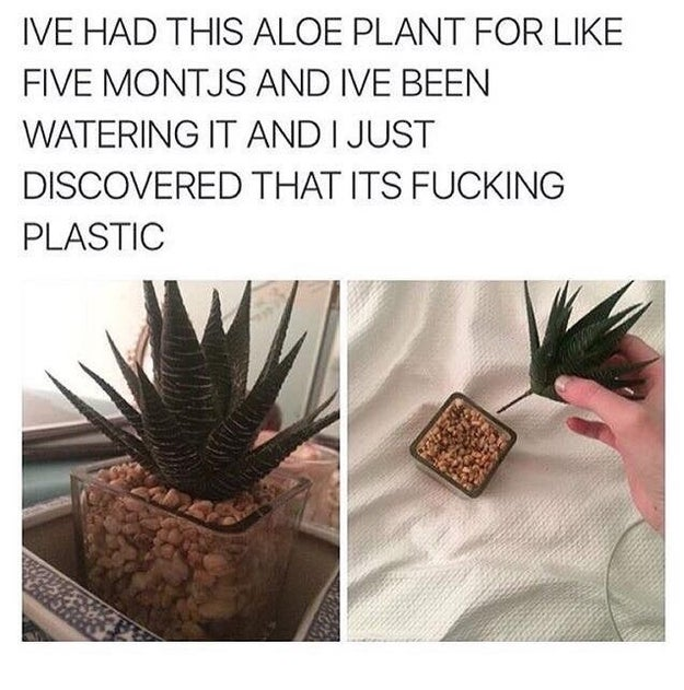 This plant owner who thought his plant was real.