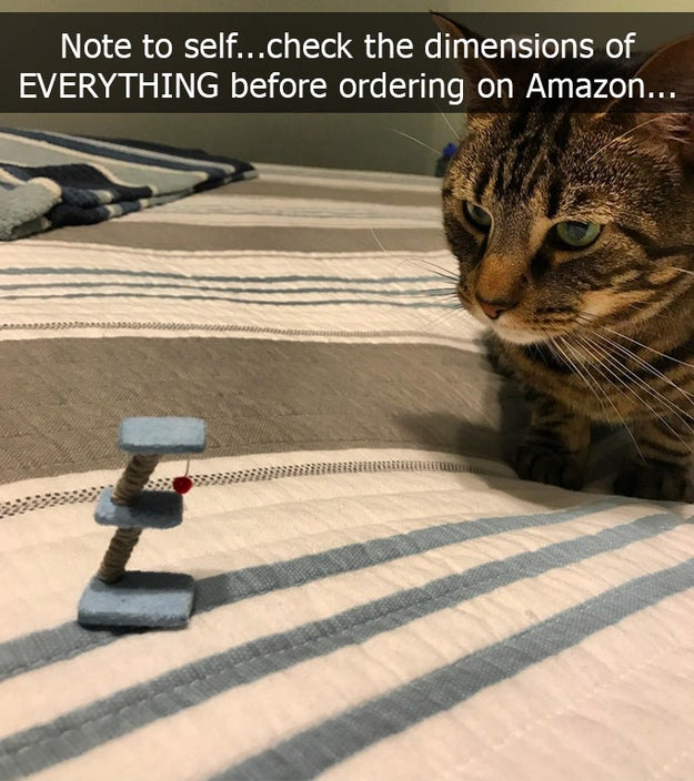 This cat owner who thought they'd ordered the correct size toy.