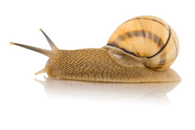 It is my great displeasure to inform you that snails have teeth.