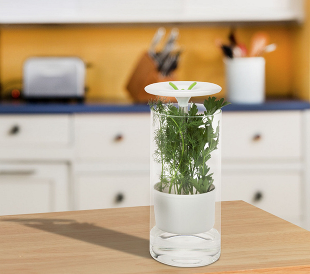 This glass preserver for your favorite herbs, because herbs are both beautiful and delicious.