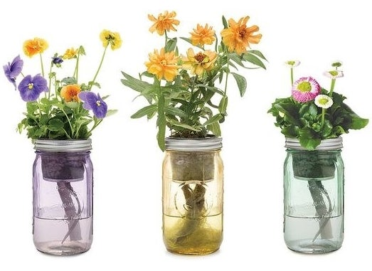 Kit includes a mason jar, net pot, coco pith, dirt, activated charcoal, watering wick, and seeds (Pansy, Zinnia, or English Daisy). Get them from Uncommon Goods for $20 each.