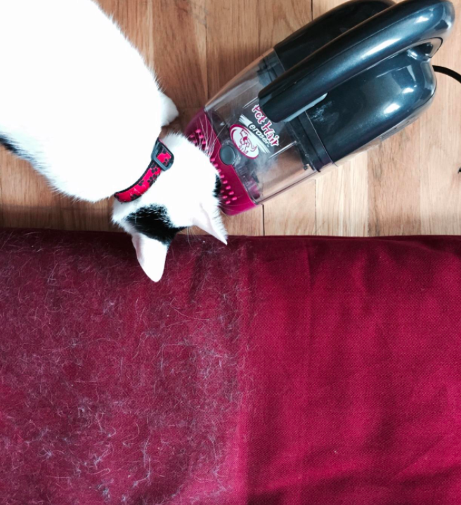 "Promising Review: ""Just got this vacuum and used it on my fabric meditation cushion, which my cats think is theirs. This powerful little bugger makes it look brand new. Using it on the sofa next. The cord is just long enough to cover my big sofa. So much better than trying to use the floor vacuum with attachments."" —openjoy Get it from Amazon for $28.79."