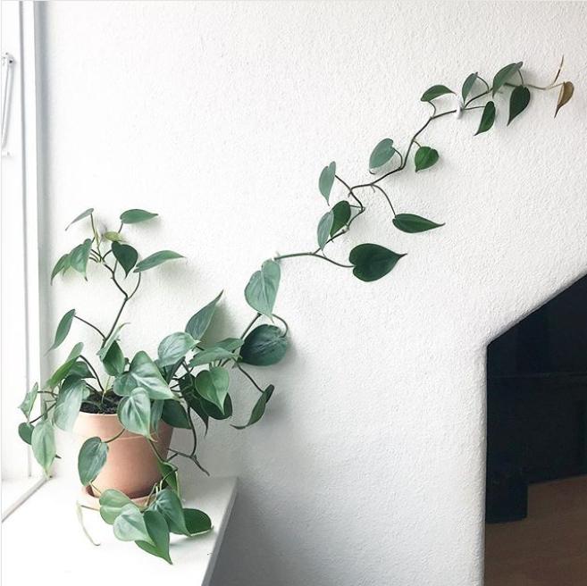 9 pflegeleichte zimmerpflanzen f r leute bei denen sogar kakteen eingehen. Black Bedroom Furniture Sets. Home Design Ideas