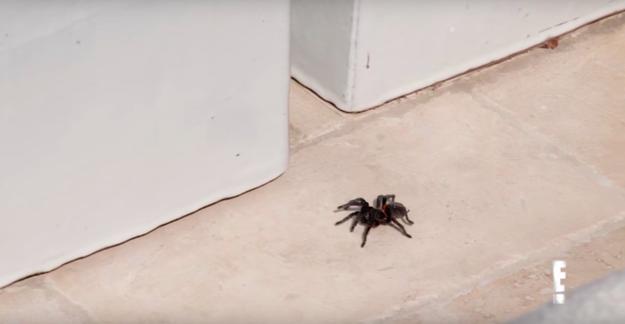 Kourtney Kardashian's House Is Infested With Tarantulas And It's Honestly Horrifying