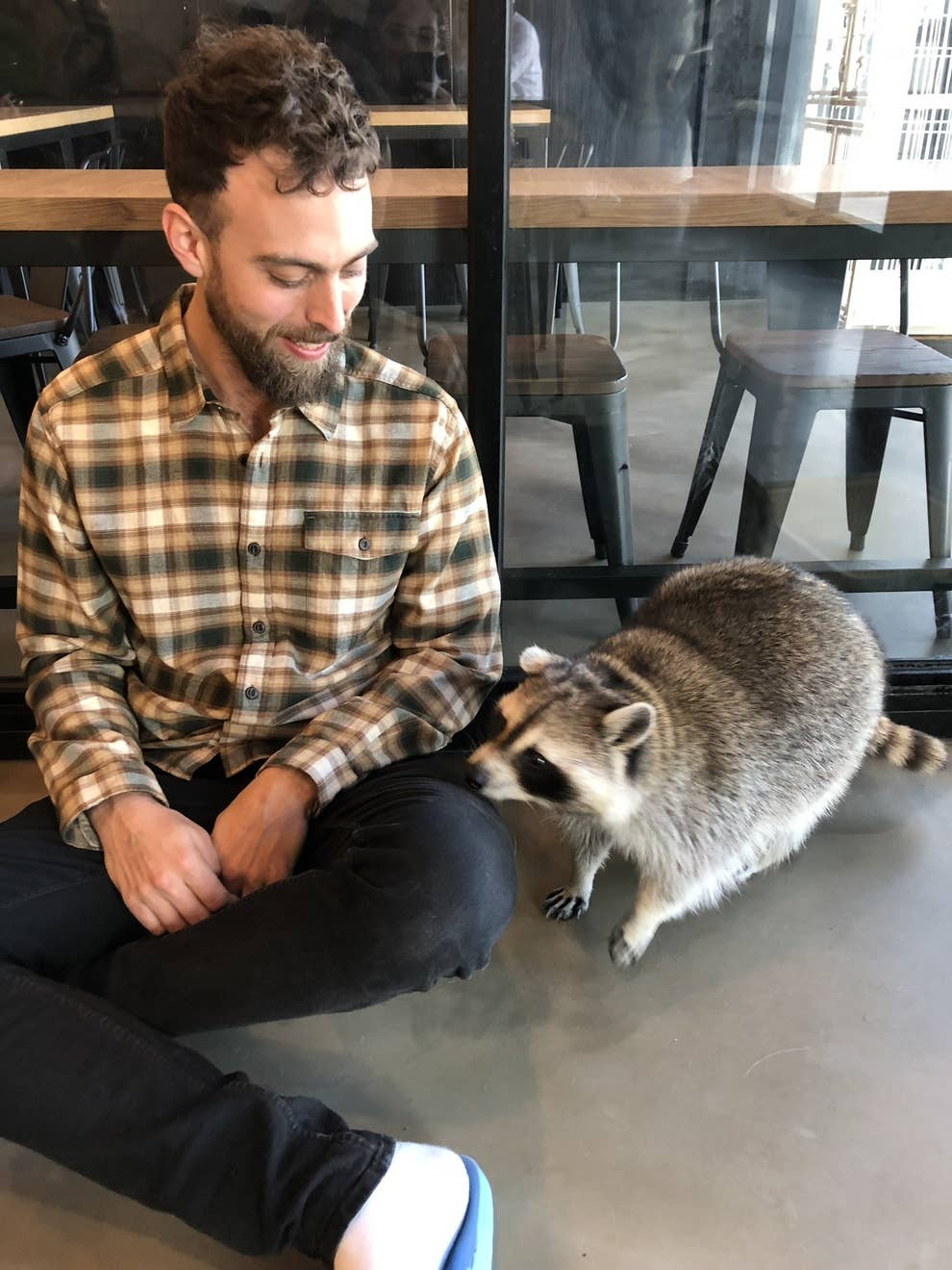 There's Literally A Raccoon Cafe In Seoul, Korea And It Will Change
