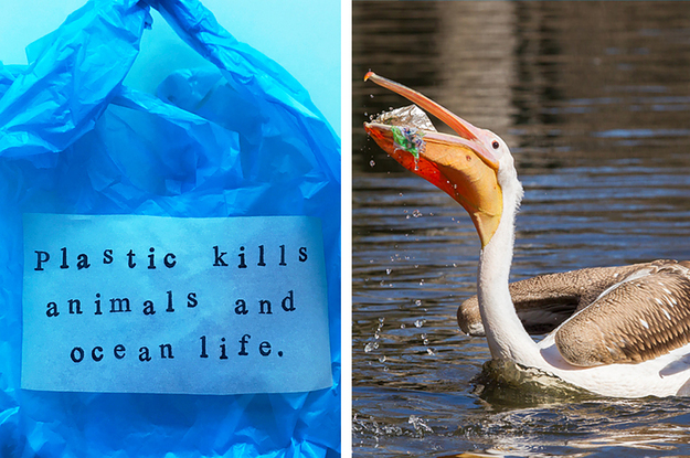 15 Facts That Will Make You Never Use Plastic Bags Again