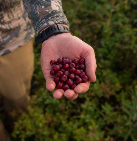 Montana: Huckleberries.