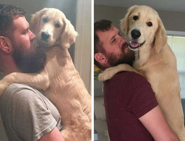 """""""The first pictures is a bit after Christmas when we got her and she started hitting the pre-teen puppy days. The second is her when she's a little more than a year old. She still begs to be picked up like this every time I come home and when my arms get tired I lay her on her back and rub her stomach."""" – corys44c14457d"""