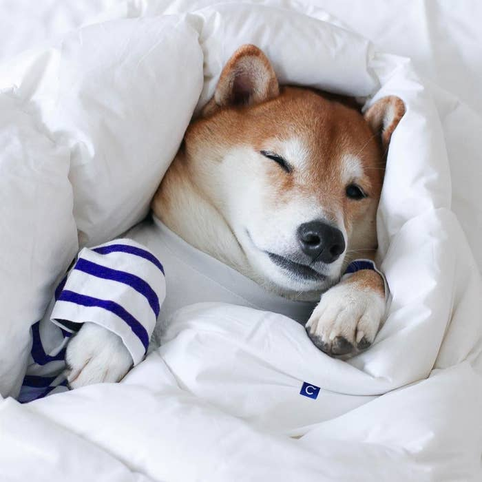 Use code PREZ200 at checkout to receive the discount. Shop mattresses here and perhaps pick up a dog bed here, too.