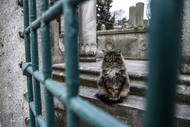 Hello. Istanbul is well known for its many stray cats.