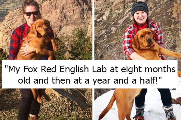 42 Wholesome Pictures Of People Who Have Grown Up Alongside Their Dogs