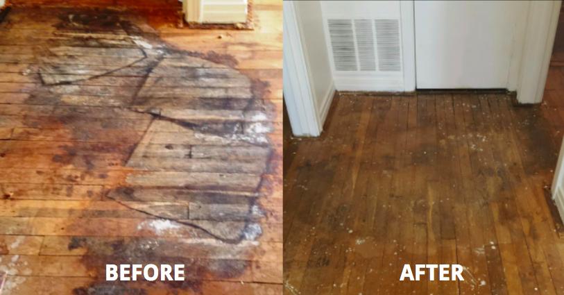 Urine Soaked Into Wood Floor Carpet Vidalondon
