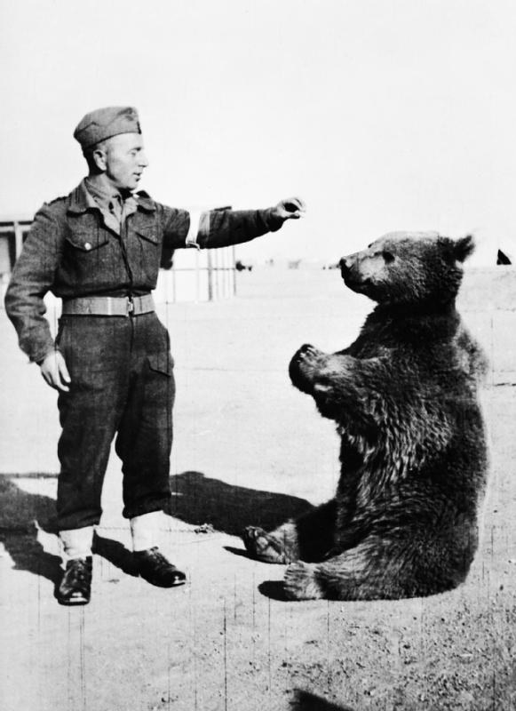 A bear fought in the Polish army during WWII.