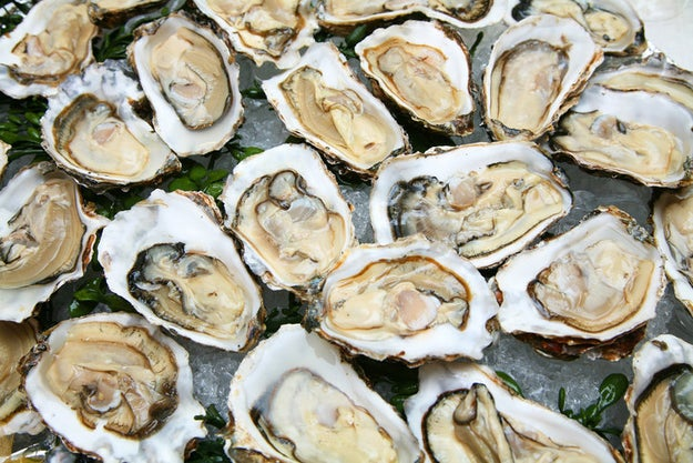 Oysters are alive when you eat them.