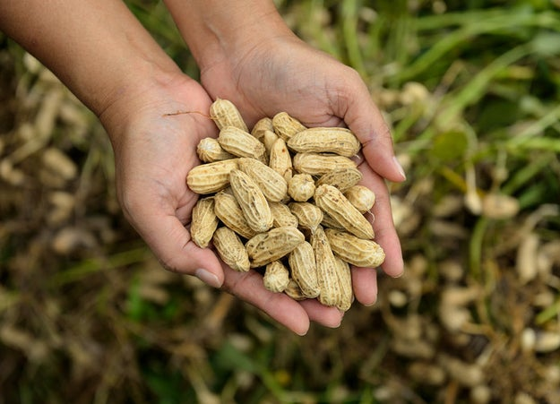 Peanuts aren't nuts, they're legumes.