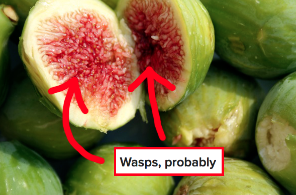 Most figs actually contain the bodies of dead wasps.