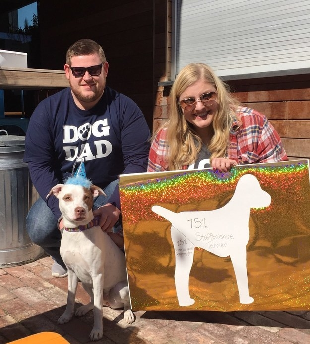 """These dog parents threw a """"breed reveal party"""" when they got their pup's DNA test back."""