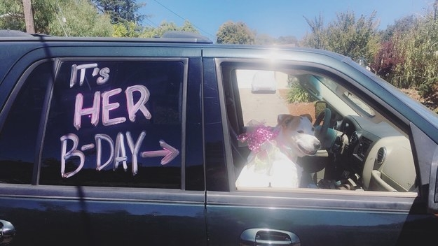"""But how about this pet parent who drove the birthday girl around town with the windows down and """"Who Let the Dogs Out?"""" turned up!"""