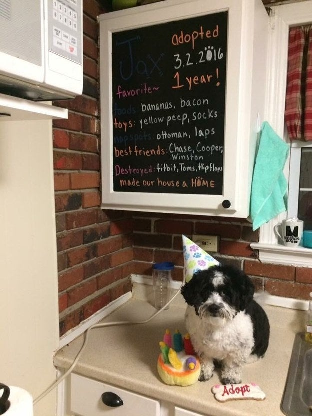 """""""This is Jax's adoptiversary board! We adopted him so we don't know his birthday, so we celebrate his """"gotcha"""" day!""""—meghanh17"""