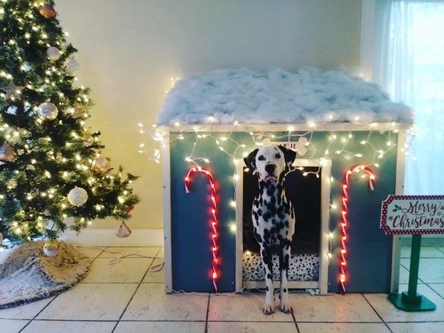 """""""I had my dad make my dog, Charlie, a house to put inside my house. And I got some foam and sewed together a Dalmatian-patterned dog bed to fit in there."""" —rachiec36"""