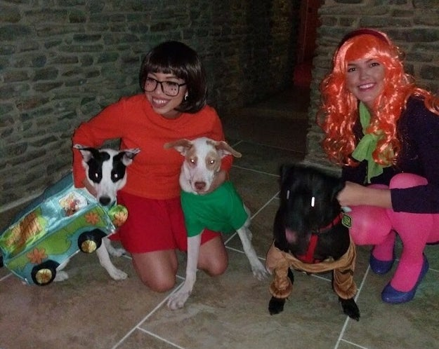 This group costume has more dogs than humans in it.