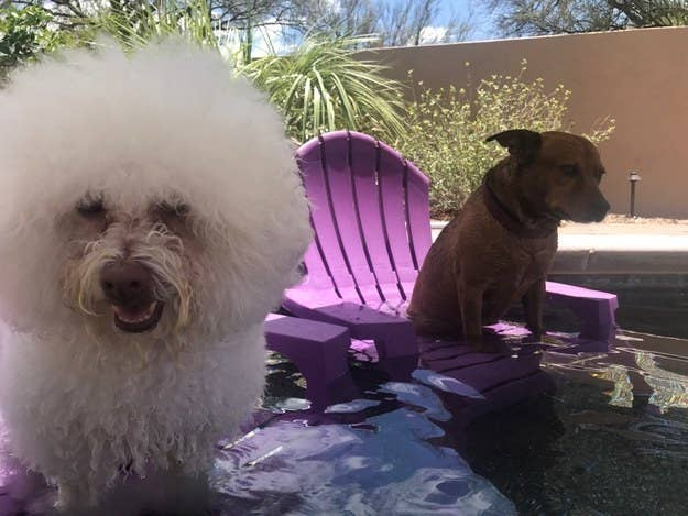 """They each have a plastic Adirondack chair and an umbrella for them to lounge under during the dog days of summer. Clearly one of them enjoys it more than the other."" —chacojones"