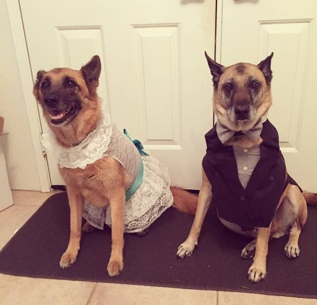 """My mom made my dogs a matching wedding dress and tuxedo when we got married. The wedding dress came complete with a veil and a garter.""—hungryotter"
