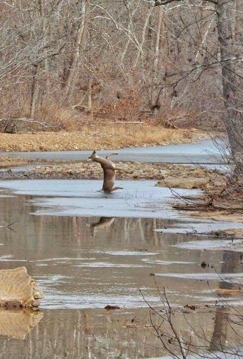 Oh...deer!
