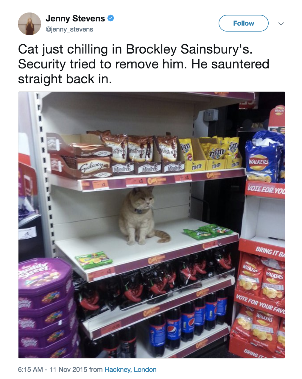 18 Cats Who Think Your Rules Are Dumb And So Are You