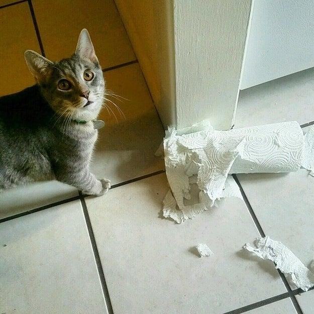 Cat toys? Keep 'em.