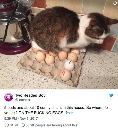 Fancy cat beds? Keep 'em!
