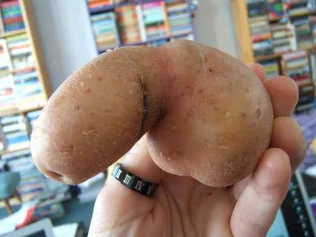 Technically, this is just a potato, not a penis.