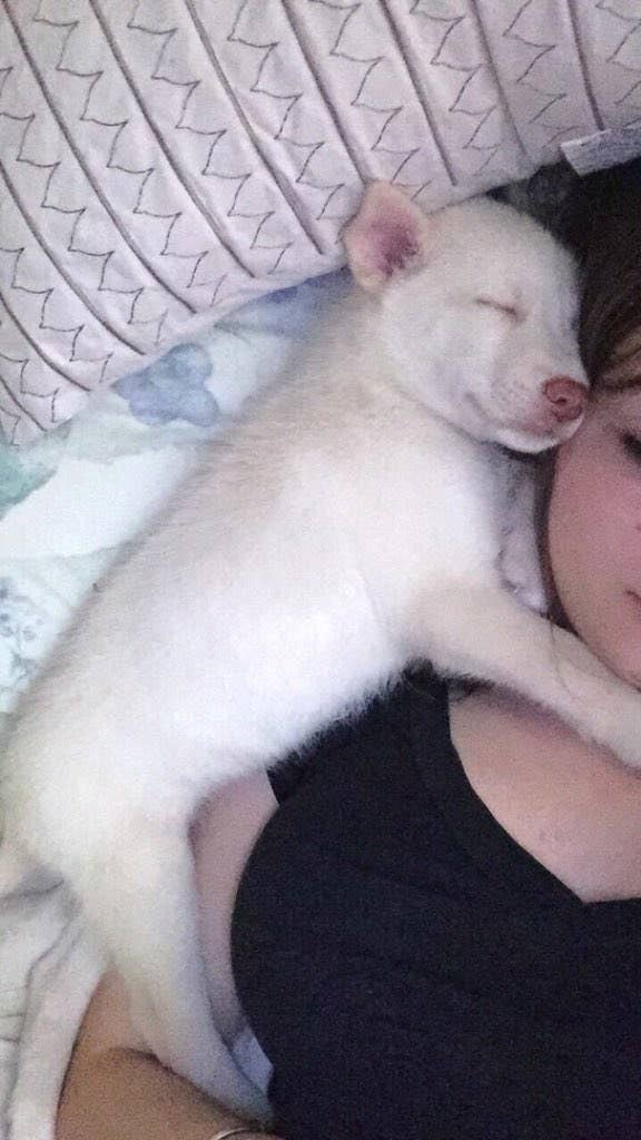 These College Girls Exchanged Nude Pics For A Puppy And They