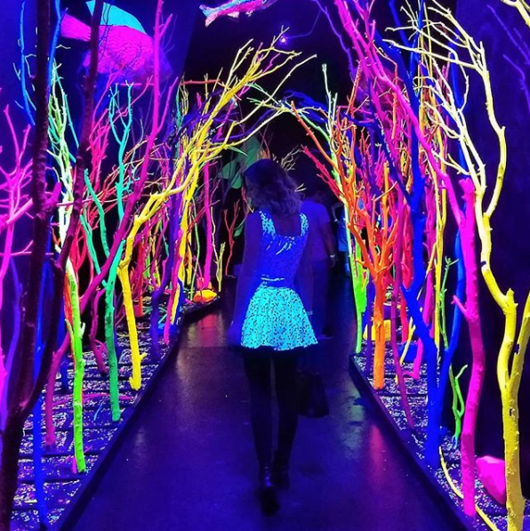 Residents of New Mexico know that Meow Wolf is an eye-popping experience.