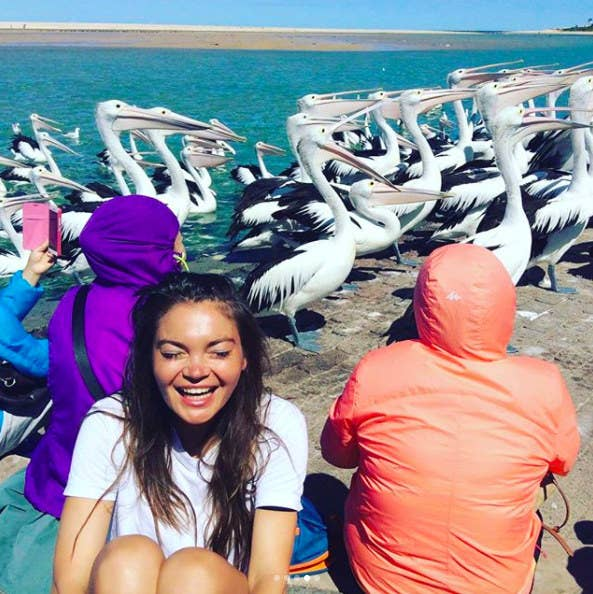 There's nothing like watching hungry pelicans get fed! Locals have been feeding pelicans at The Entrance waterfront for 20 years. They do this to keep an eye on the pelican's wellbeing and medical conditions. It's quite the spectacle!
