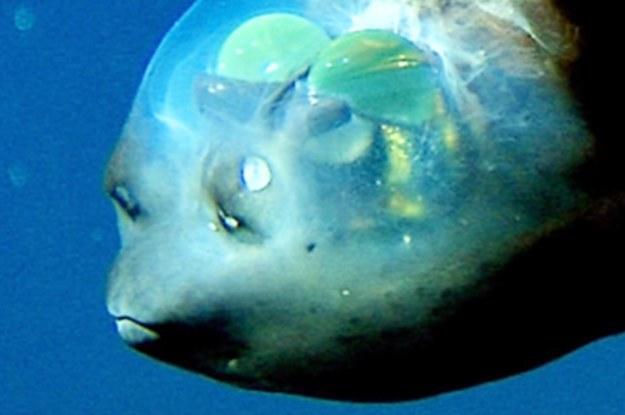 27 Ozean-Fakten, die machen, dass du dich sehr, sehr klein fühlst