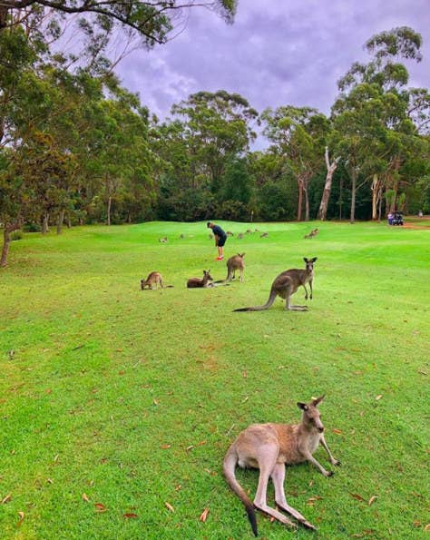 In the late afternoon, you can spot kangaroos at Nelson Bay Golf Club. You can either walk or ride in a golf cart, while learning about kangaroos and other wildlife from an experienced local.