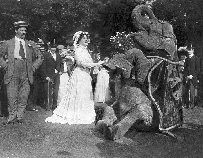 An elephant performs at a garden party hosted for Olympic athletes by Britain's Lord Michelham in 1914.