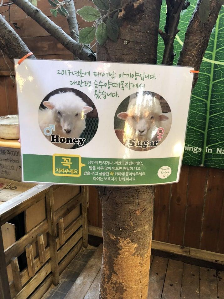 With sheep named Honey and Sugar.