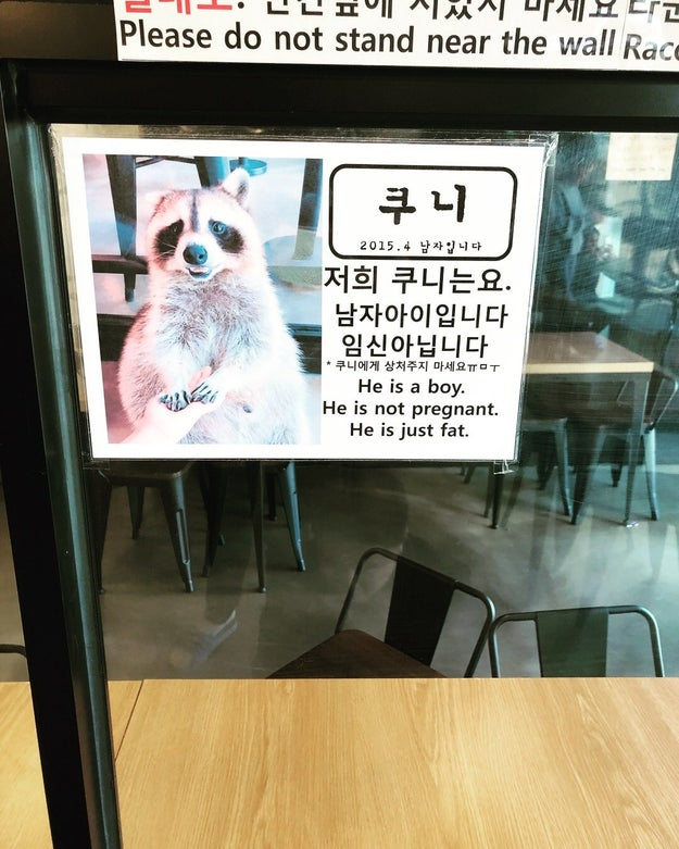 Also, let's just applaud this sign celebrating raccoon body positivity.