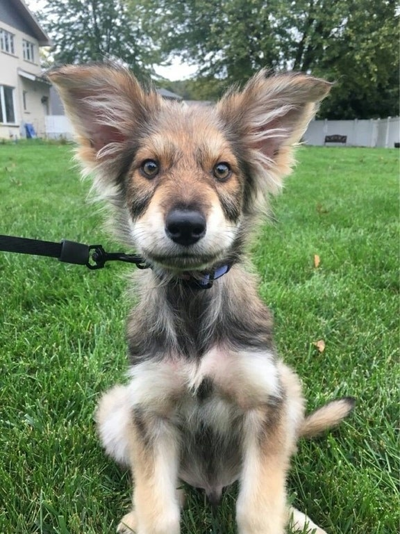 15 German Shepherd Mixes That Will Make You Say I Want One Pets