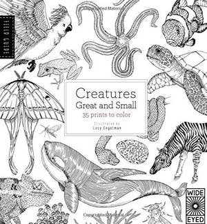 A Field Guide To Creatures Of All Sizes So You Can Feel Like Darwin While Coloring In Animal Prints